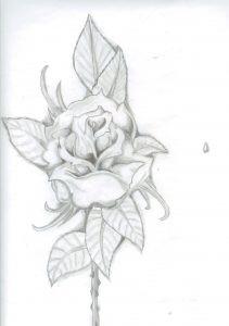 róża 001
